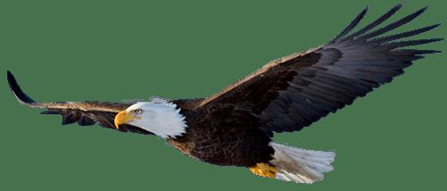 usf_eagle_1